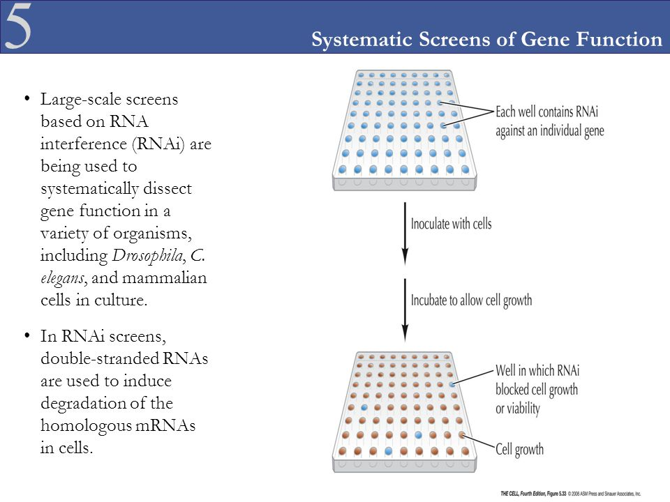 Systematic Screens of Gene Function