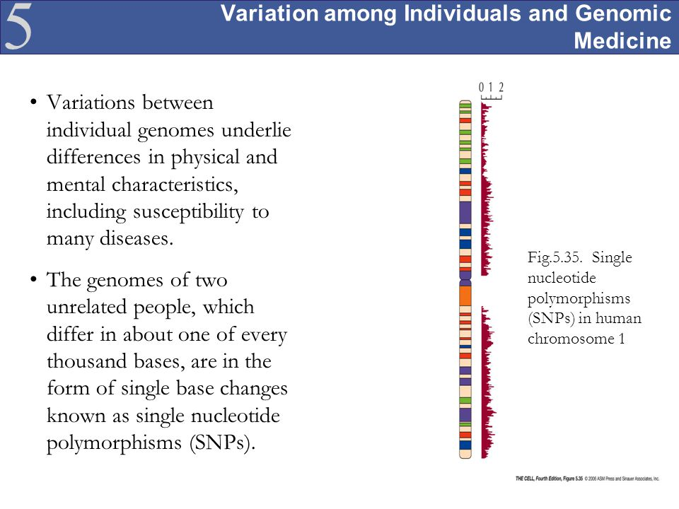 Variation among Individuals and Genomic Medicine