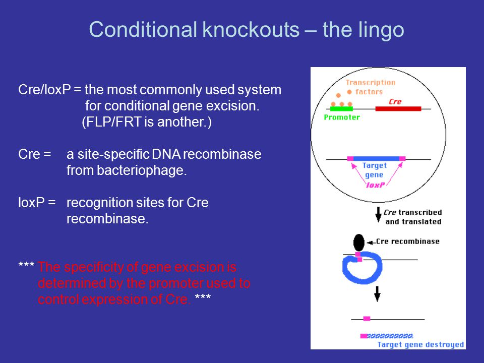 Conditional knockouts – the lingo