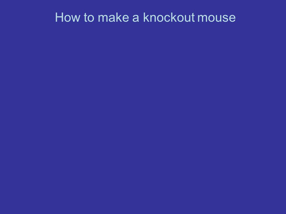 How to make a knockout mouse