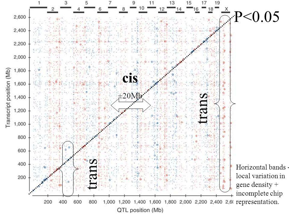 Results I P<0.05 trans trans cis ±20Mb
