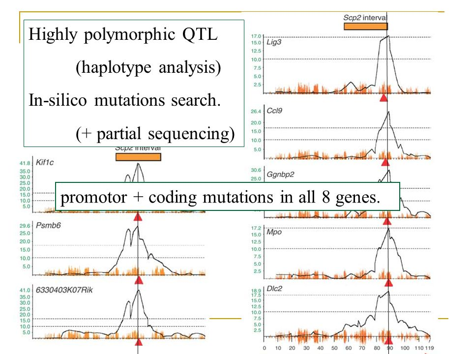 8 potential genes Highly polymorphic QTL (haplotype analysis)