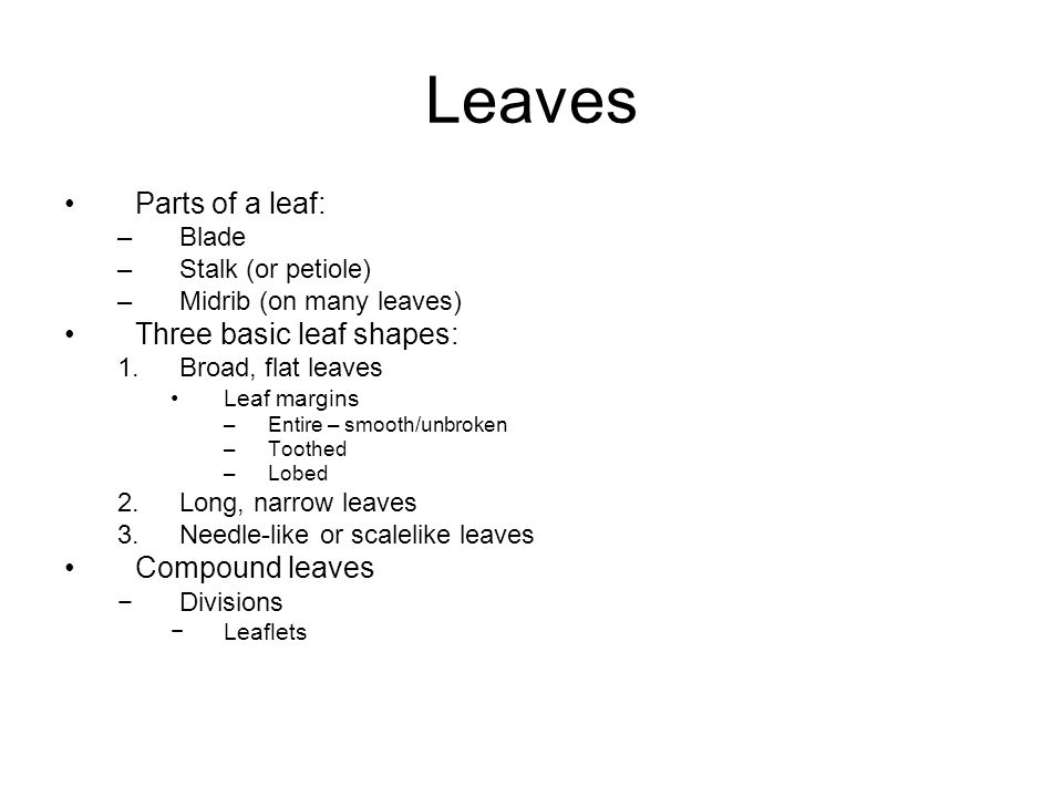 Leaves Parts of a leaf: Three basic leaf shapes: Compound leaves Blade