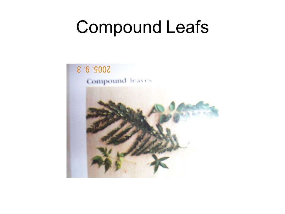 Compound Leafs