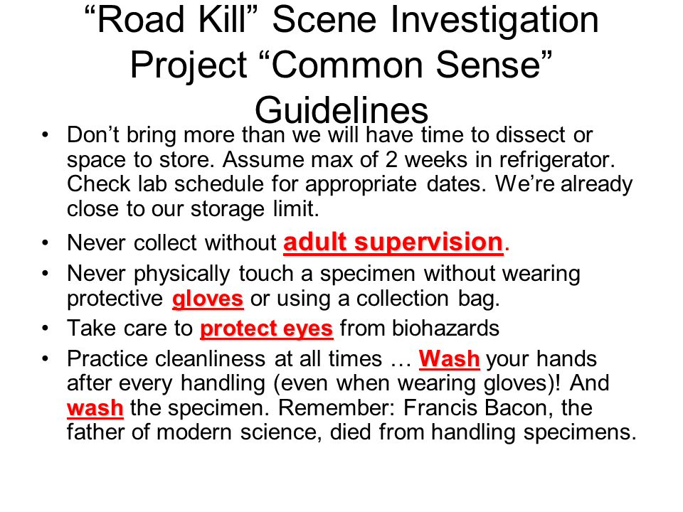 Road Kill Scene Investigation Project Common Sense Guidelines