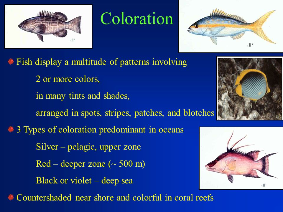 Coloration Fish display a multitude of patterns involving