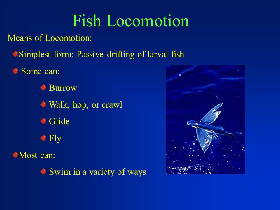 Fish Locomotion Means of Locomotion: