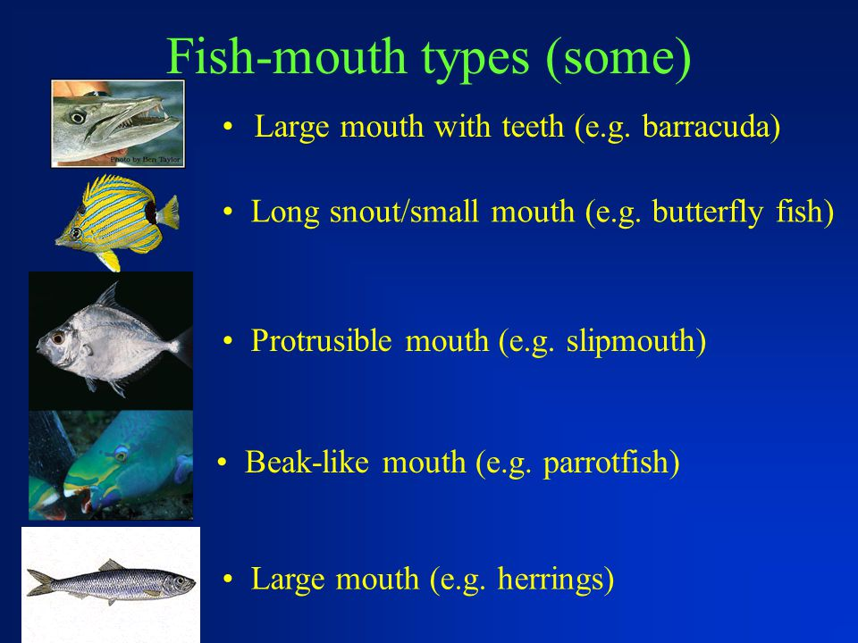 Fish-mouth types (some)