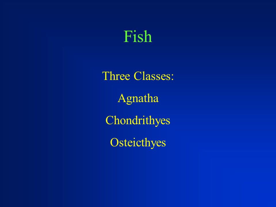 Fish Three Classes: Agnatha Chondrithyes Osteicthyes