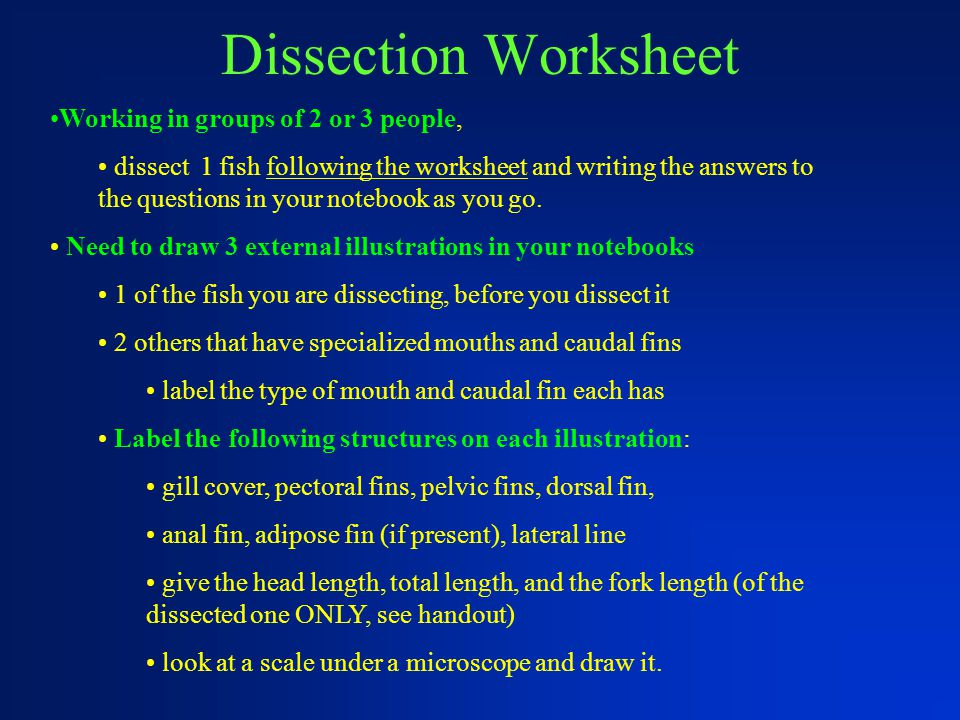 Dissection Worksheet Working in groups of 2 or 3 people,