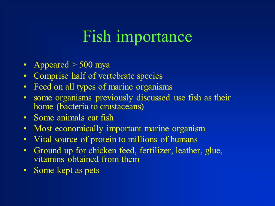 Fish importance Appeared > 500 mya