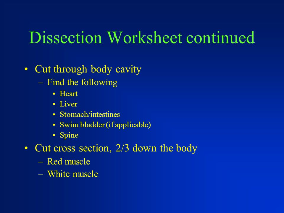 Dissection Worksheet continued