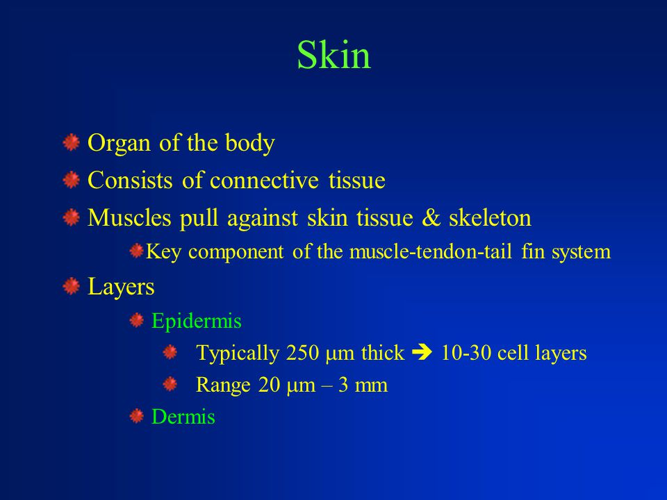Skin Organ of the body Consists of connective tissue