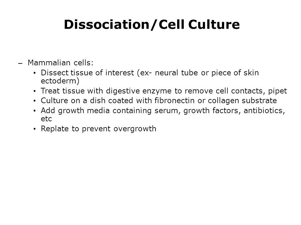 Dissociation/Cell Culture