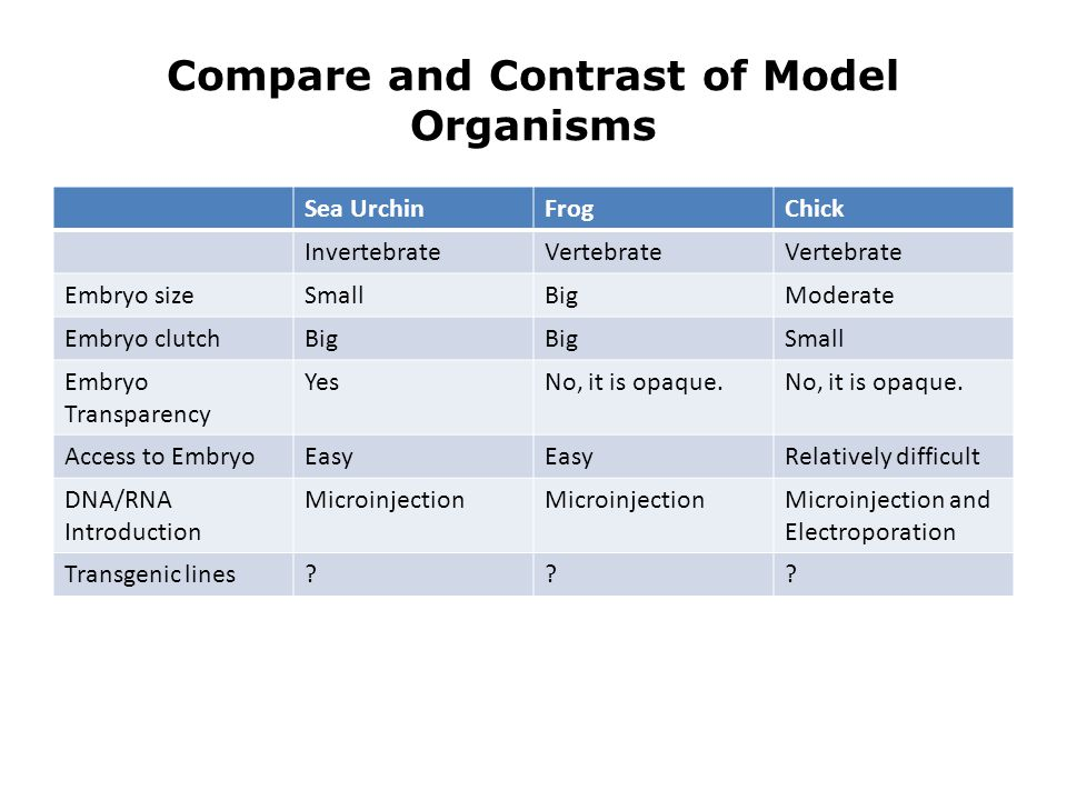Compare and Contrast of Model Organisms