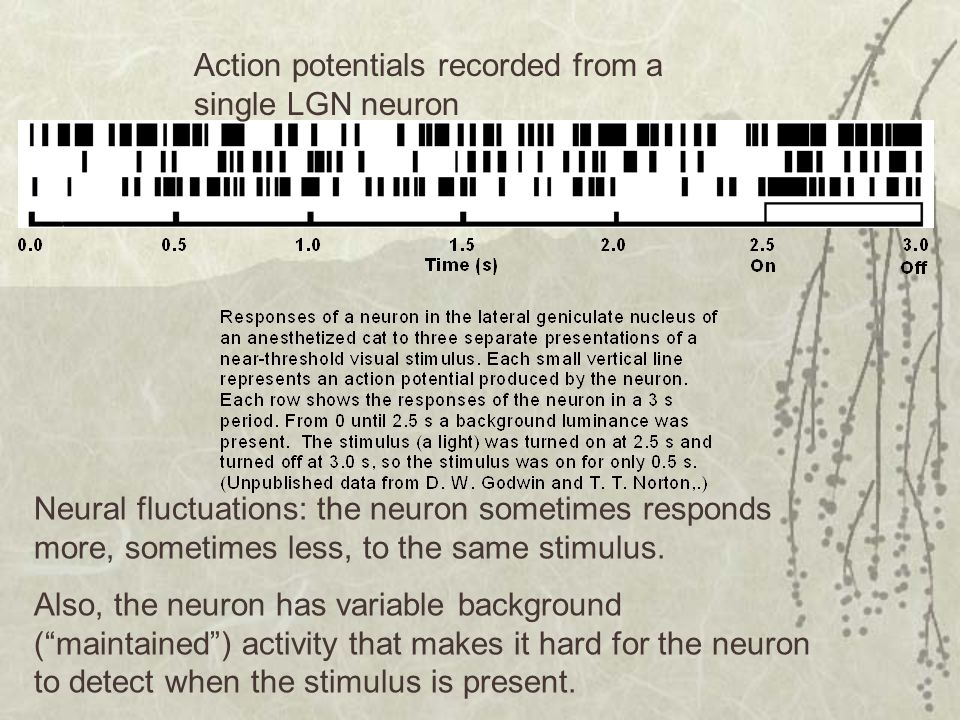 Action potentials recorded from a single LGN neuron
