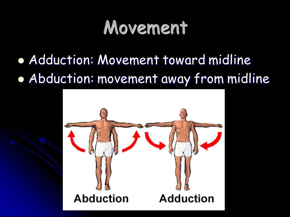Movement Adduction: Movement toward midline