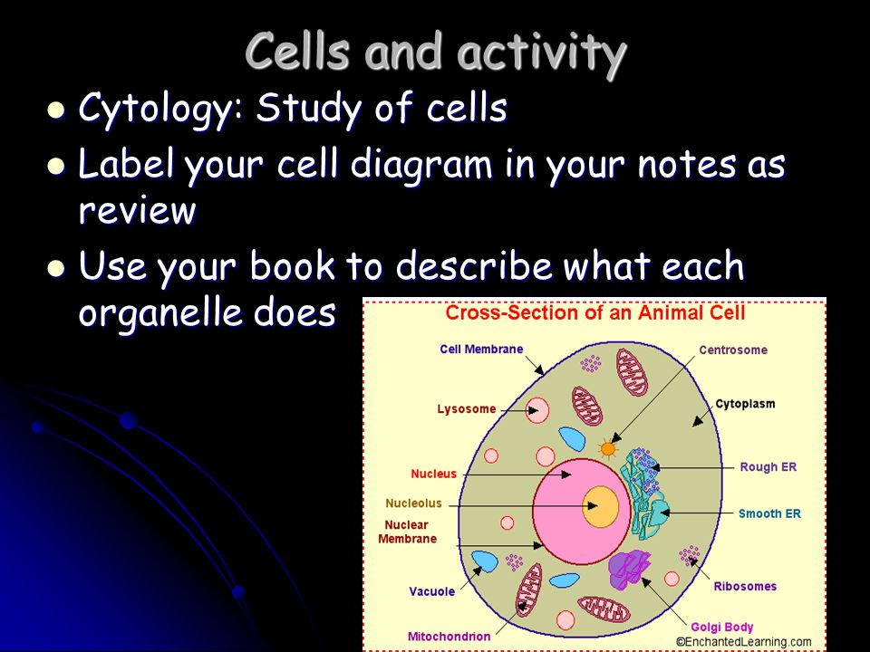 Cells and activity Cytology: Study of cells