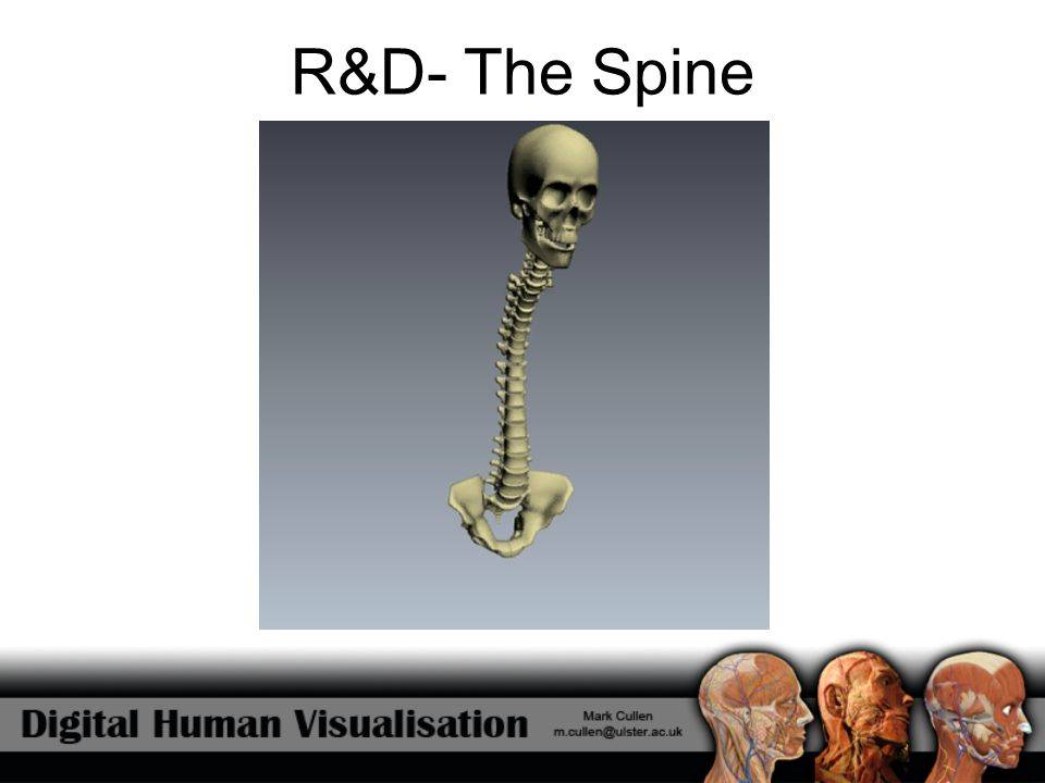R&D- The Spine
