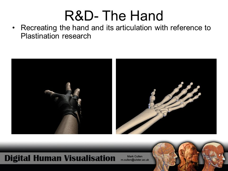 R&D- The Hand Recreating the hand and its articulation with reference to Plastination research