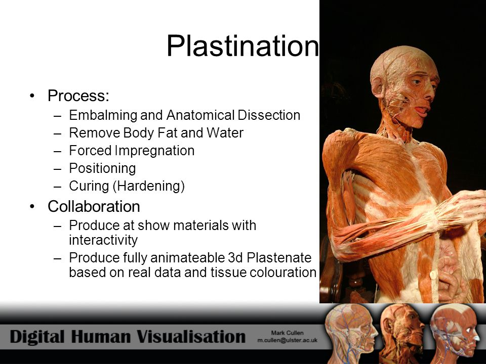Plastination Process: Collaboration