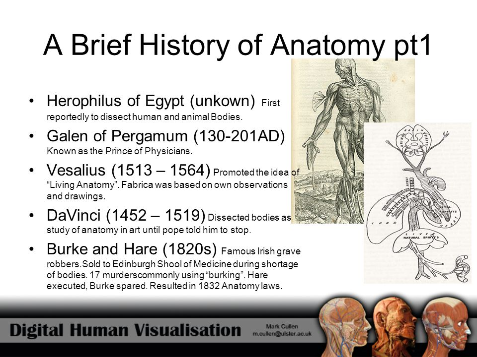 A Brief History of Anatomy pt1