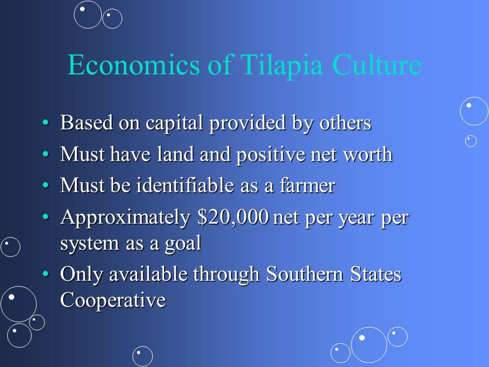 Economics of Tilapia Culture