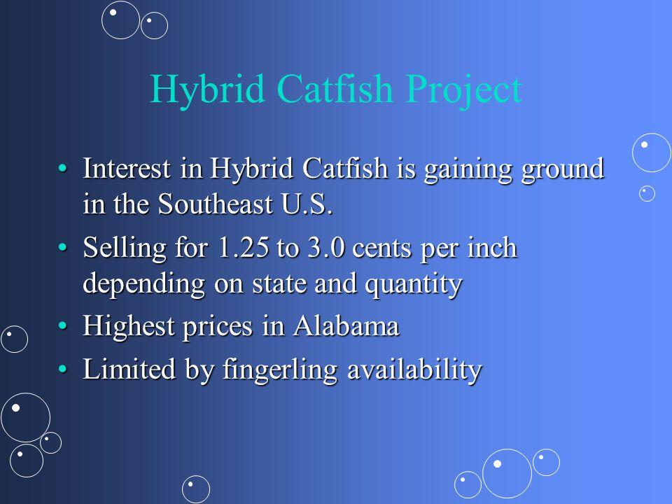 Hybrid Catfish Project