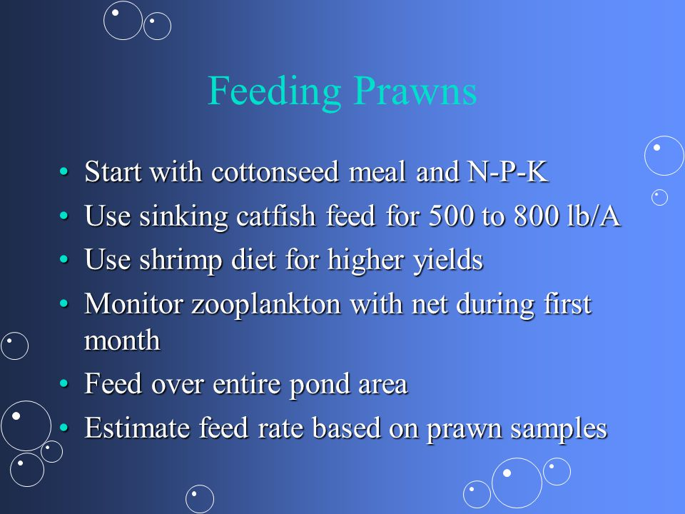 Feeding Prawns Start with cottonseed meal and N-P-K
