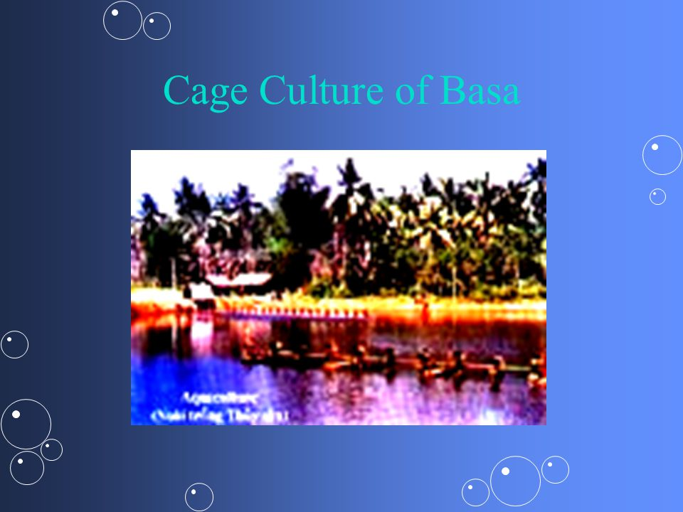 Cage Culture of Basa