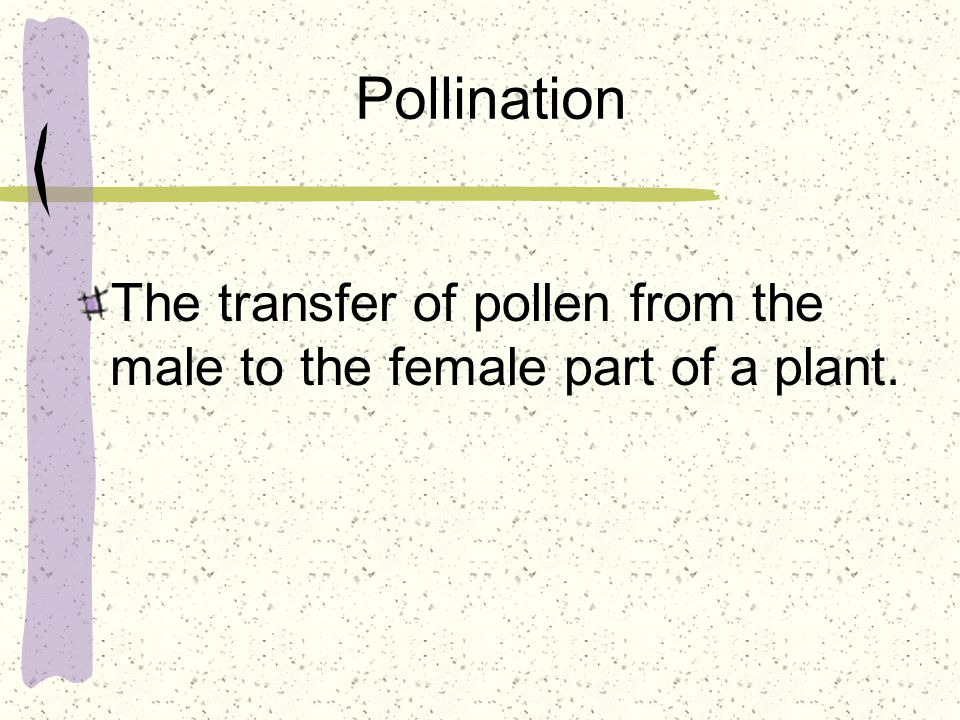 Pollination The transfer of pollen from the male to the female part of a plant.