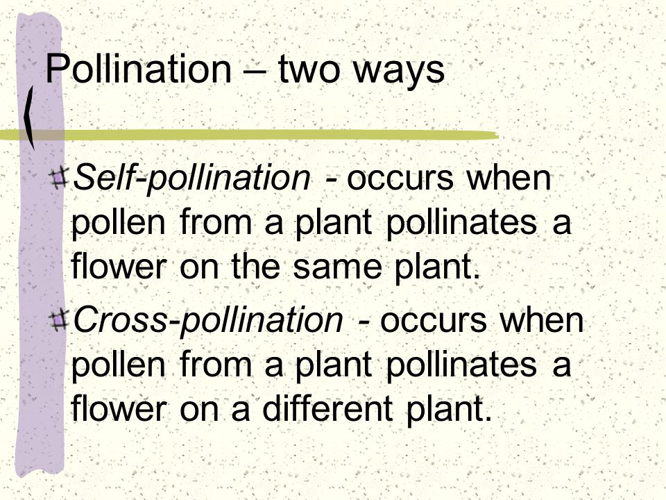 Pollination – two ways Self-pollination - occurs when pollen from a plant pollinates a flower on the same plant.
