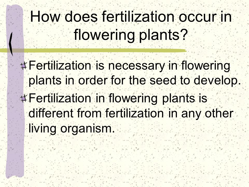 How does fertilization occur in flowering plants