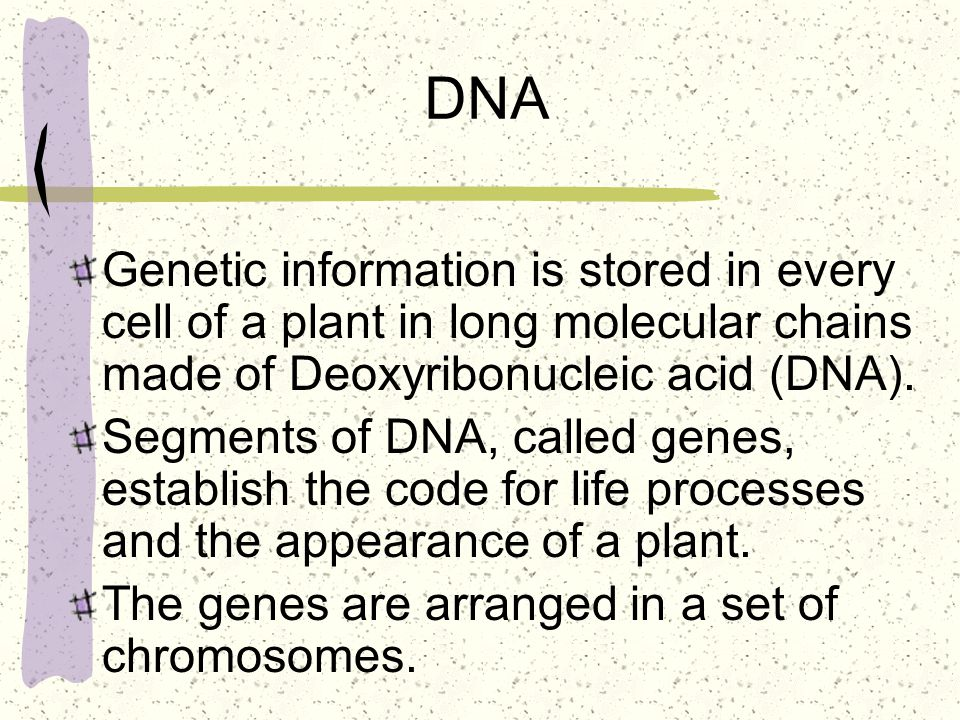 DNA Genetic information is stored in every cell of a plant in long molecular chains made of Deoxyribonucleic acid (DNA).