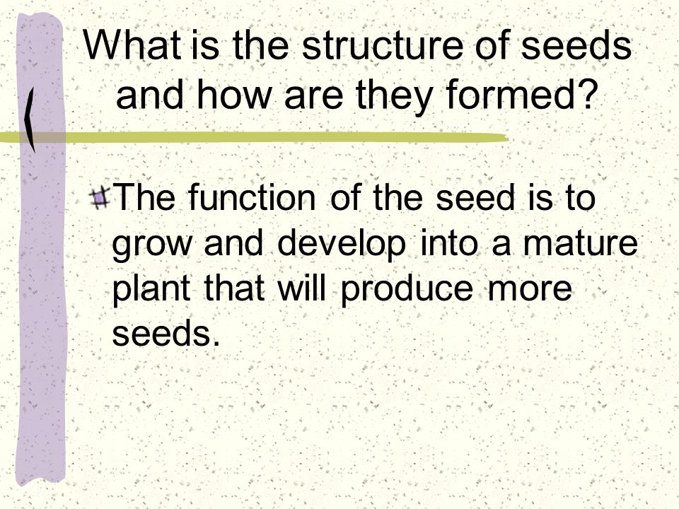 What is the structure of seeds and how are they formed