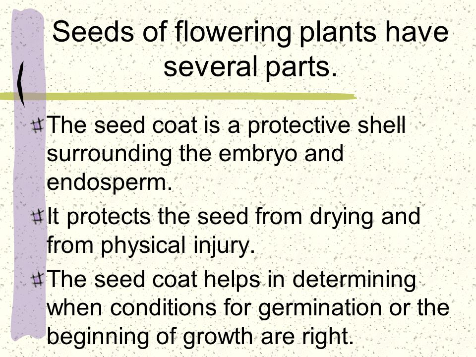 Seeds of flowering plants have several parts.