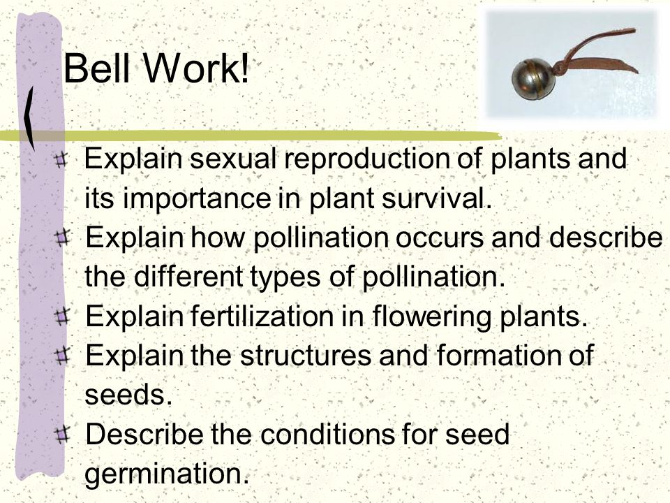 Bell Work! its importance in plant survival.