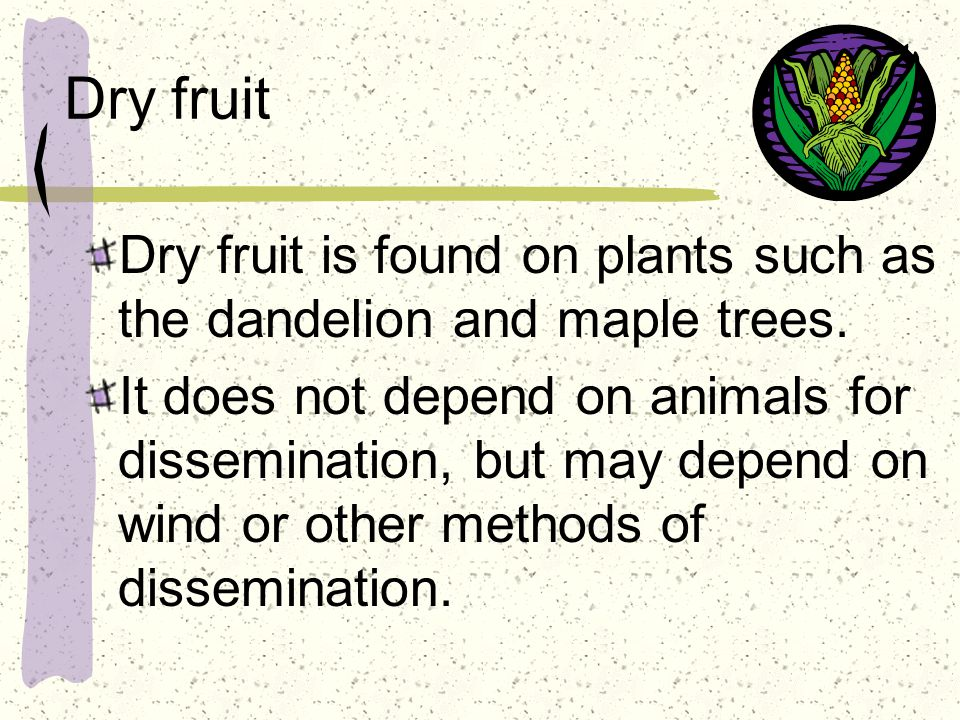 Dry fruit Dry fruit is found on plants such as the dandelion and maple trees.
