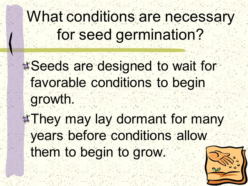 What conditions are necessary for seed germination