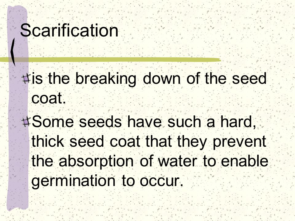 Scarification is the breaking down of the seed coat.