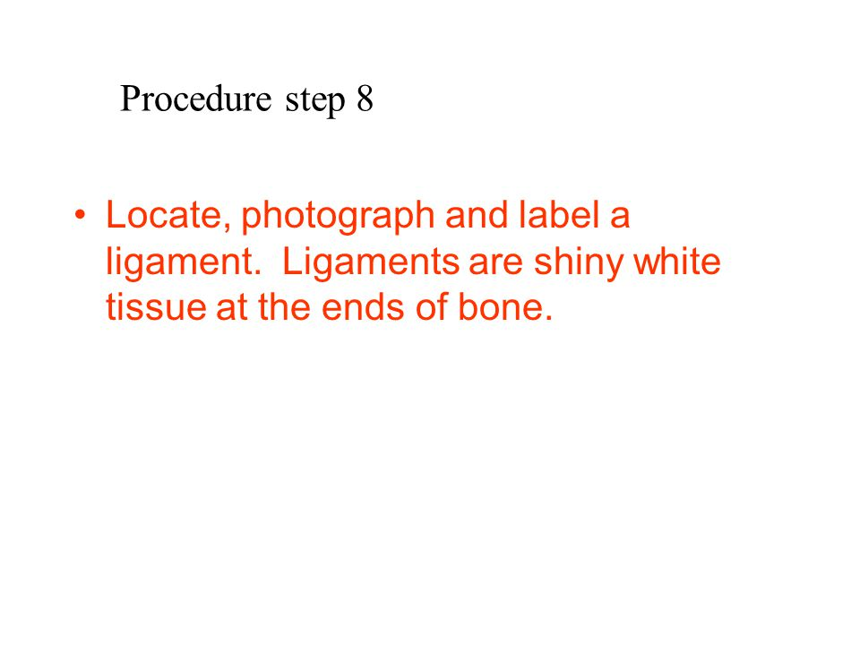 Procedure step 8 Locate, photograph and label a ligament.