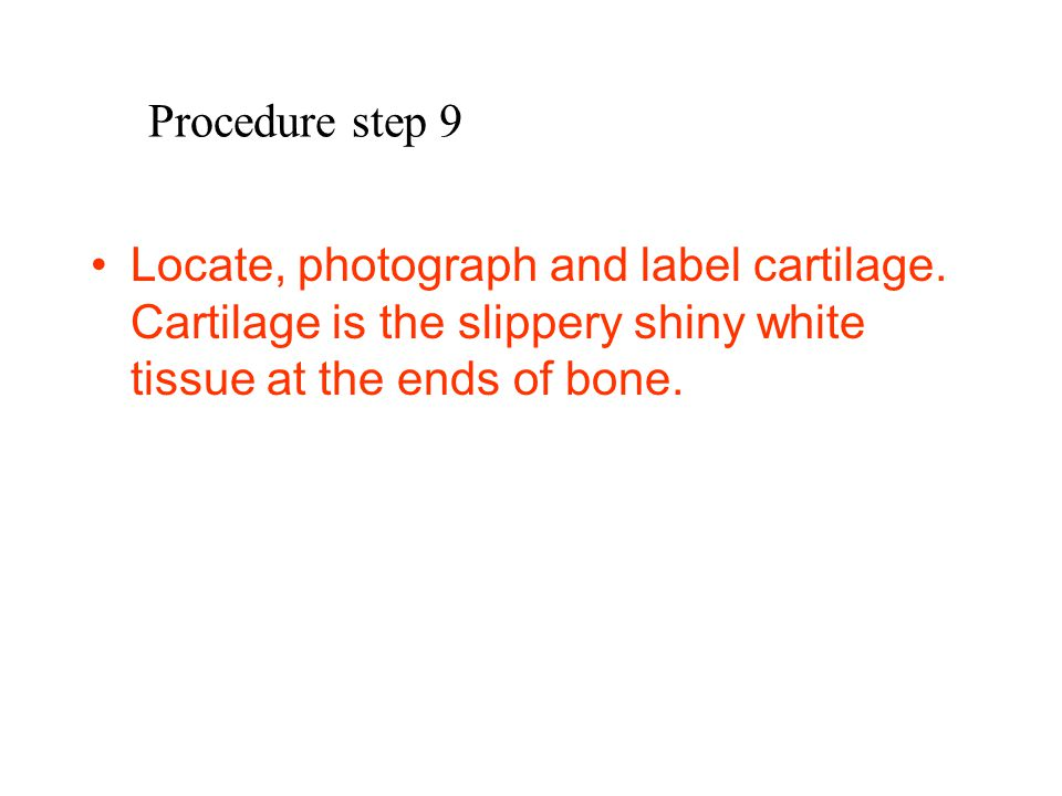 Procedure step 9 Locate, photograph and label cartilage.