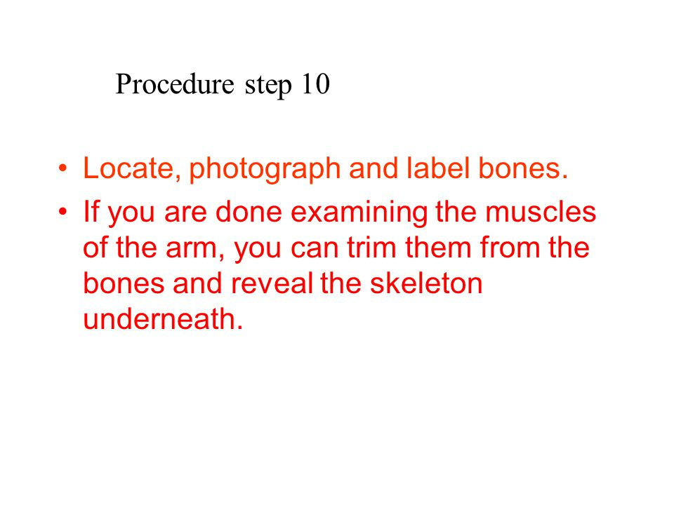 Procedure step 10 Locate, photograph and label bones.