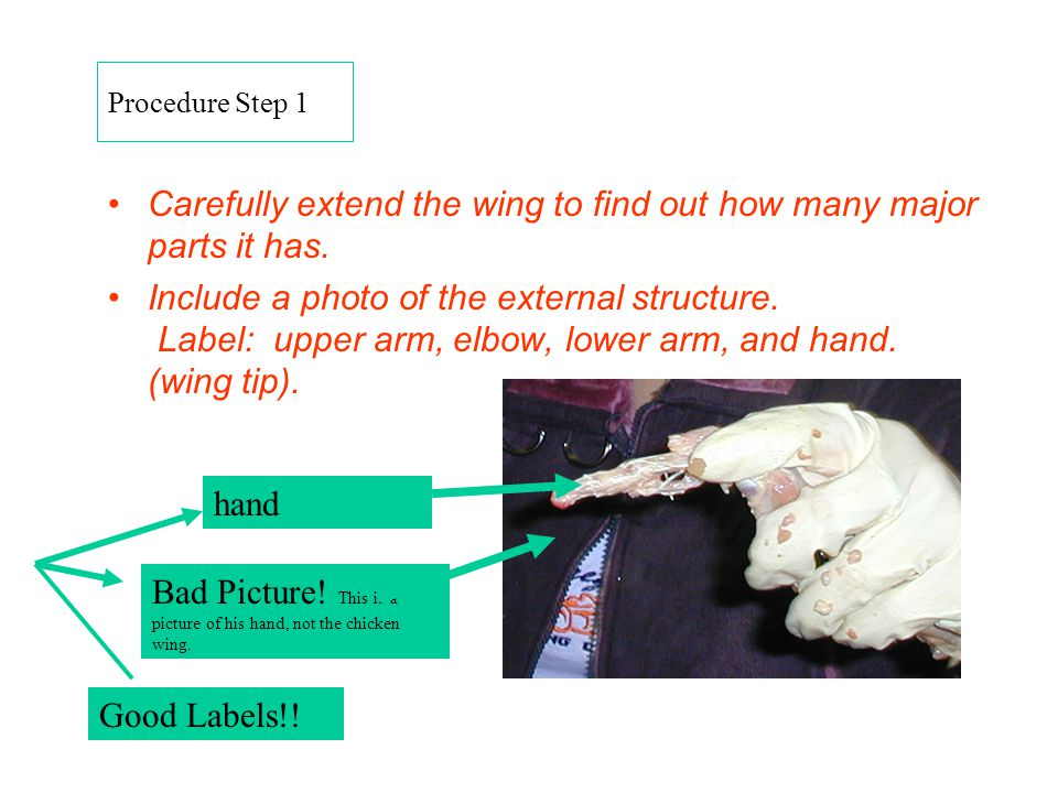 Carefully extend the wing to find out how many major parts it has.