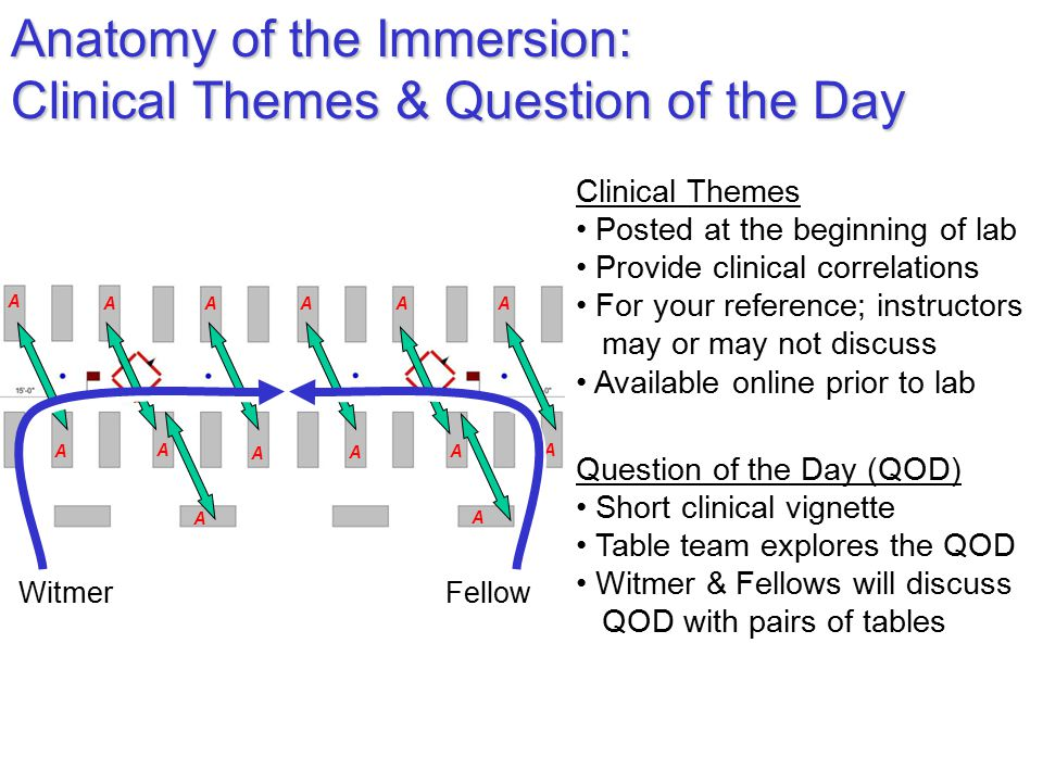 Anatomy of the Immersion: Clinical Themes & Question of the Day