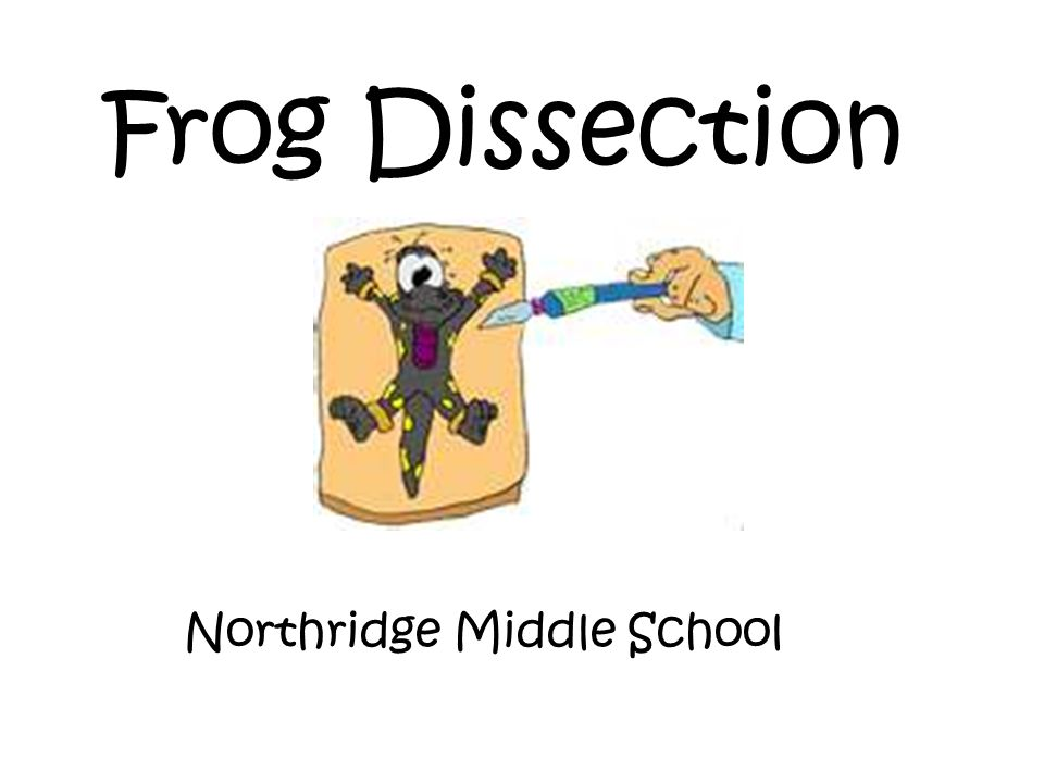 Frog Dissection Northridge Middle School
