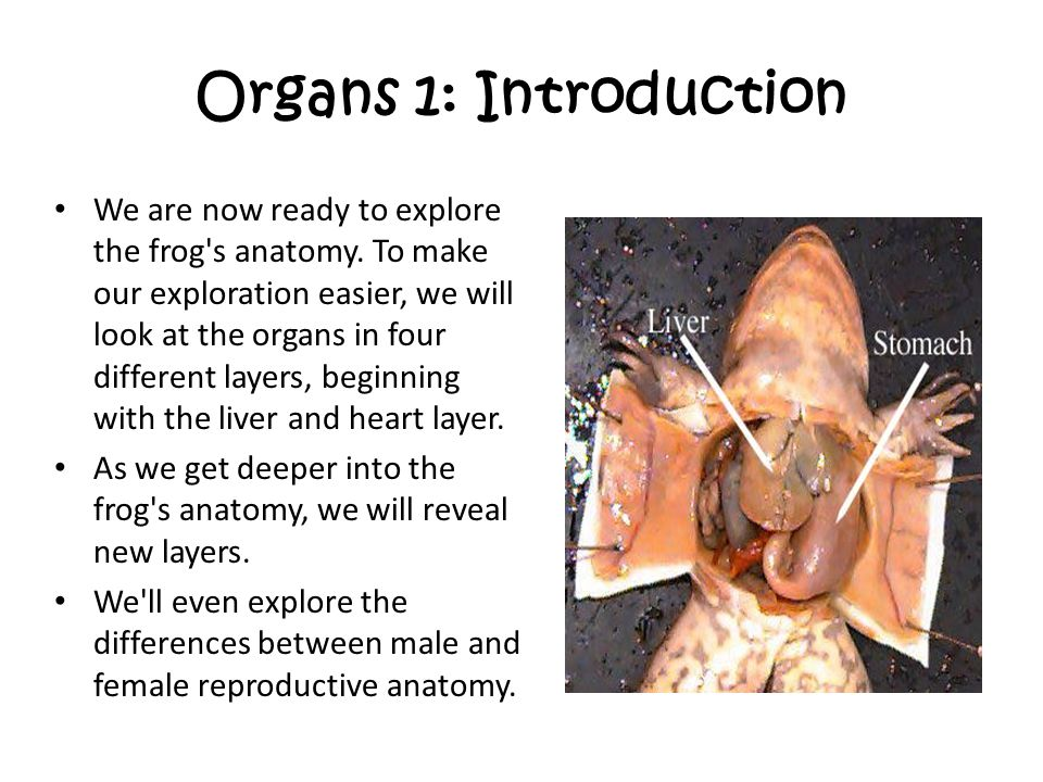 Organs 1: Introduction