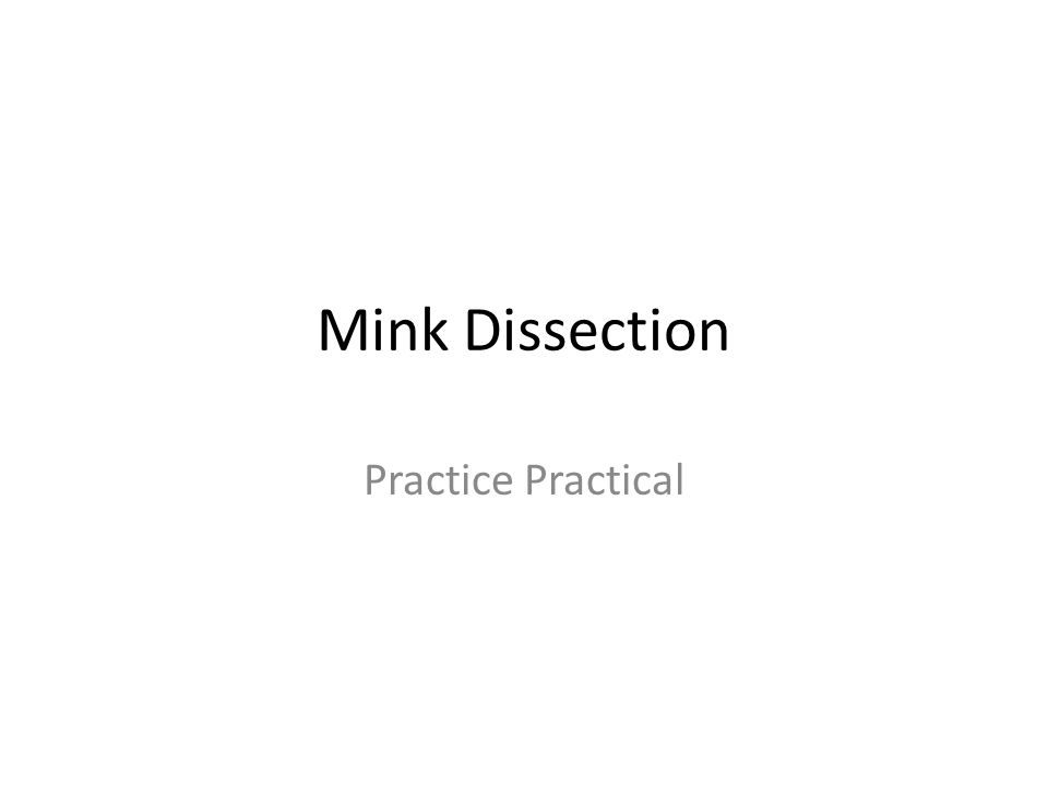 Mink Dissection Practice Practical