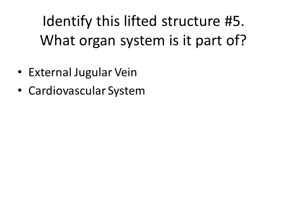 Identify this lifted structure #5. What organ system is it part of