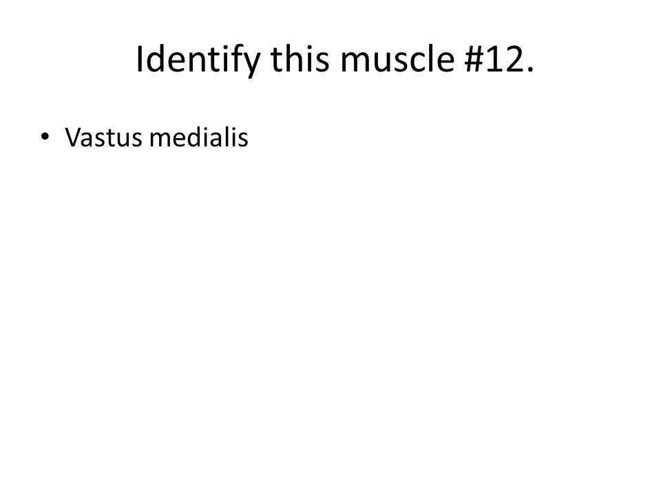 Identify this muscle #12. Vastus medialis